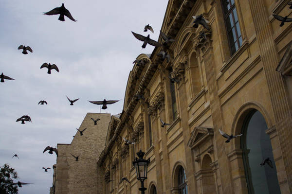 Photograph - Commotion In The Sky Of Paris by Georgia Mizuleva