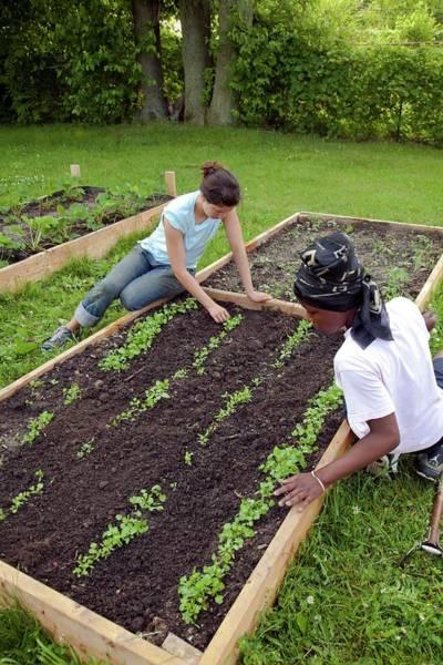 Non Profit Photograph - Community Garden Volunteers Weeding by Jim West