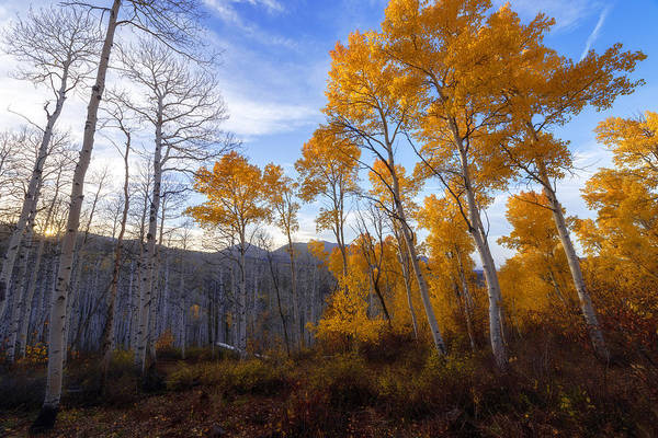 Fall Colors Photograph - Comparison by Chad Dutson