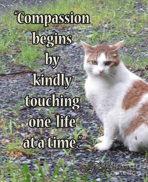 Photograph - Compassion by Linda L Martin
