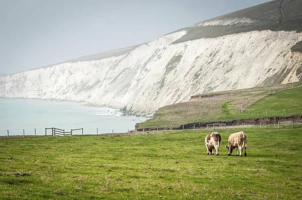 Sea Cow Photograph - Compton Bay, Isle Of Wight by Li Kim Goh