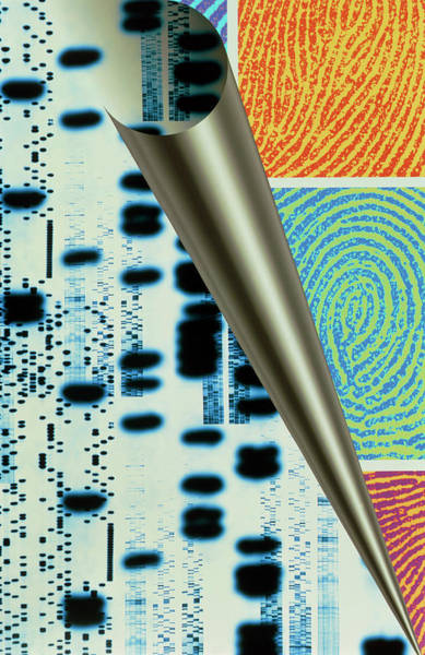 Autoradiogram Photograph - Computer Art Of Dna Sequences & Real Fingerprints by Alfred Pasieka/science Photo Library