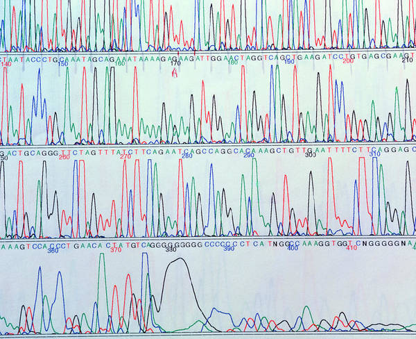 Sequence Photograph - Computer Display Of A Human Gene Sequence by Klaus Guldbrandsen/science Photo Library