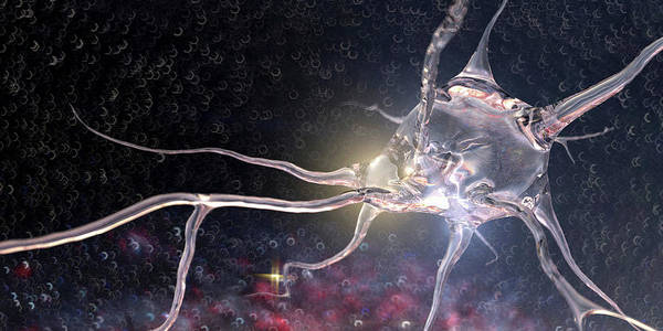 Wall Art - Photograph - Computer Generated Translucent Neuron by Ikon Images