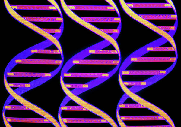 Double Helix Wall Art - Photograph - Computer Graphic Of Three Strands Of Dna by Mehau Kulyk/science Photo Library