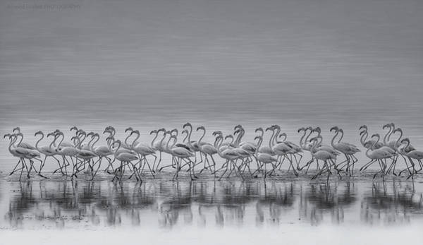 Sea Bird Photograph - Comrades by Ahmed Thabet