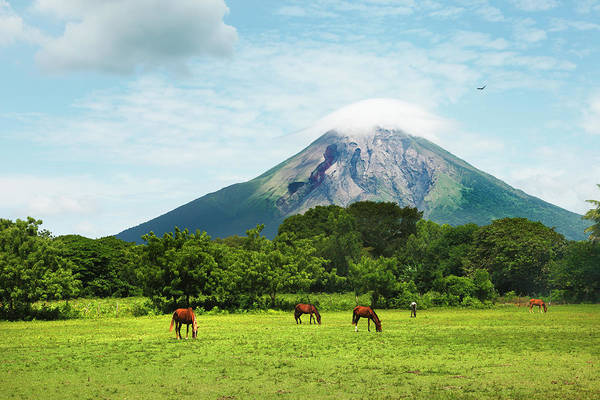 Grazing Photograph - Concepcion Volcano With Grazing Horses by Paul Taylor