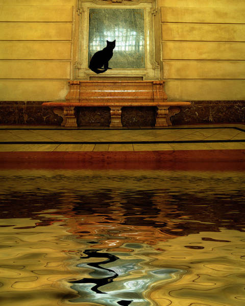 Black Cats Photograph - Concept Of Black Cat And Water by Jaynes Gallery