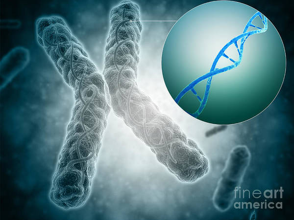 Digital Art - Conceptual Image Of A Telomere Showing by Stocktrek Images
