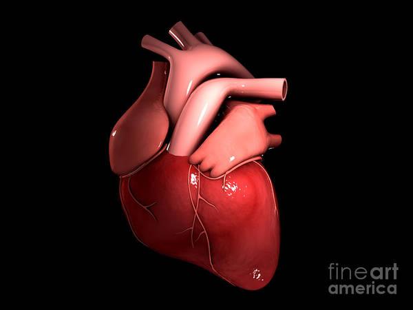 Digital Art - Conceptual Image Of Human Heart by Stocktrek Images