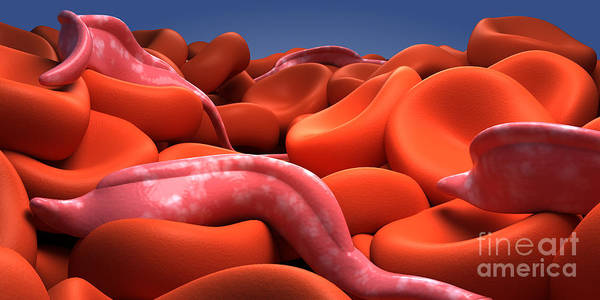 Digital Art - Conceptual Image Of Trypanosoma by Stocktrek Images