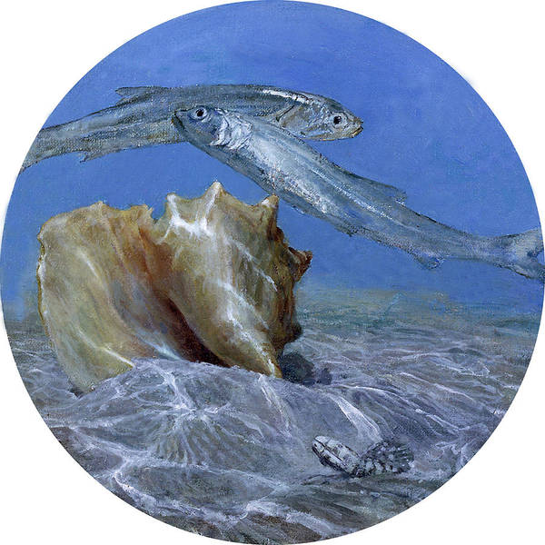Wall Art - Photograph - Conch And Ladyfish, 2001 Pair by Stanley Meltzoff / Silverfish Press