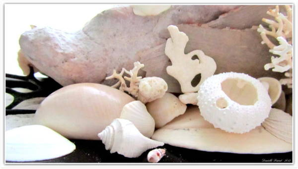 Photograph - Conch And Tropical Shells  Meddley by Danielle  Parent