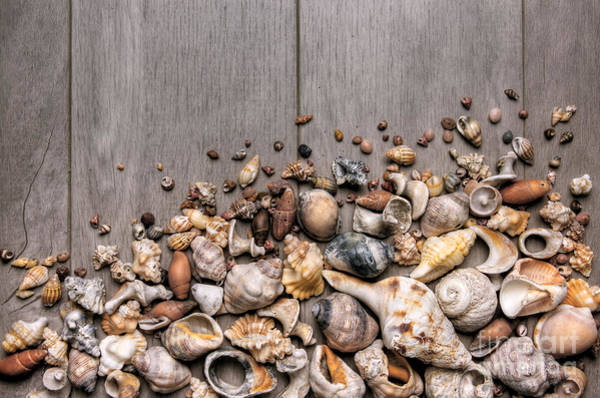 Wall Art - Photograph - Conchs And Shells by Carlos Caetano