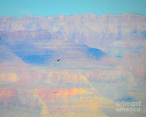 Photograph - Condor Series A by Cheryl McClure