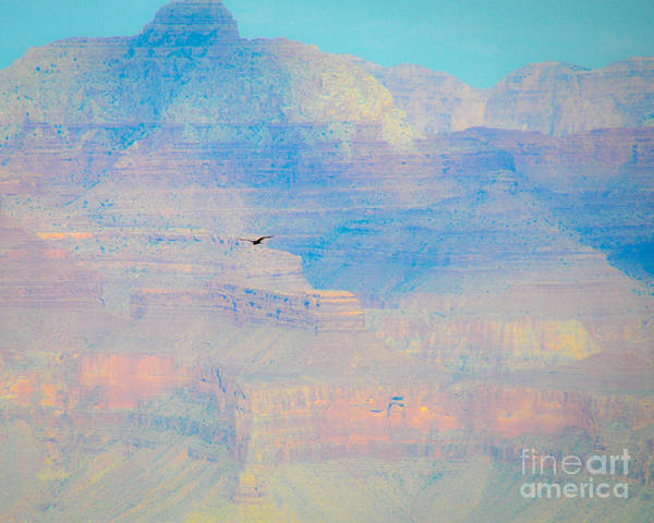 Photograph - Condor Series C by Cheryl McClure