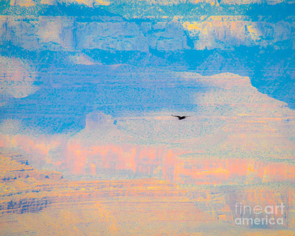 Photograph - Condor Series E by Cheryl McClure