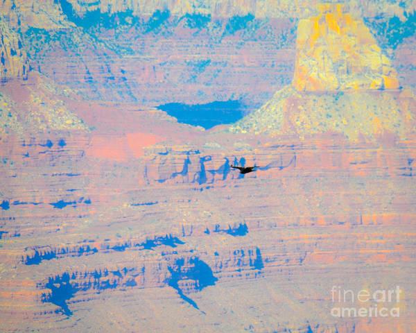Photograph - Condor Series F by Cheryl McClure