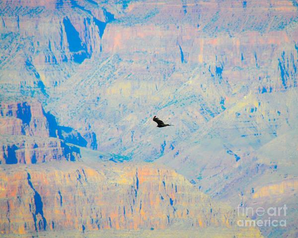 Photograph - Condor Series H by Cheryl McClure
