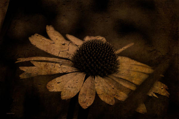 Photograph - Cone Flower Art Coffee by Lesa Fine