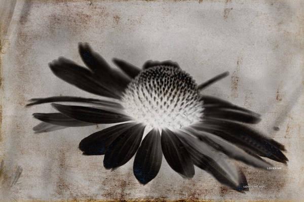 Mixed Media - Cone Flower Art - Loves Me Loves Me Not by Lesa Fine