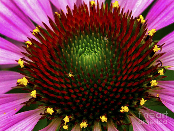 Wall Art - Photograph - Coneflower - Little Yellow Spider by Paul W Faust -  Impressions of Light