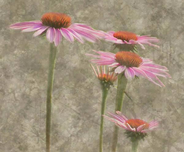 Digital Art - Coneflowers by Grace Dillon