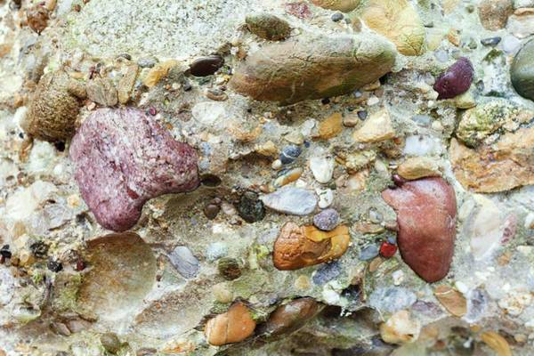 Specimen Photograph - Conglomerate Rock by Dr Juerg Alean