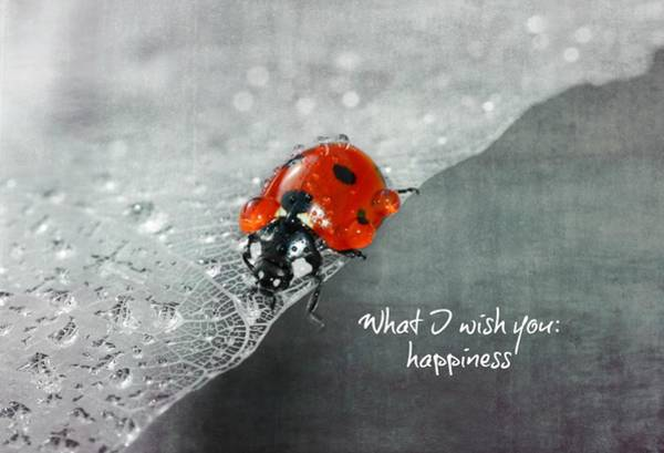 Happiness Mixed Media - Congratulation by Heike Hultsch