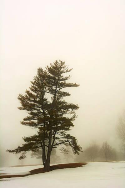 Coniferous Tree In Winter Art Print