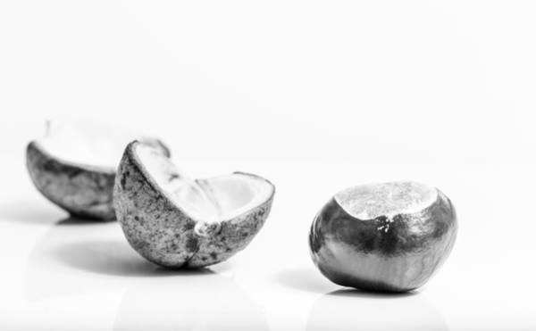 Photograph - Conker by Gary Gillette
