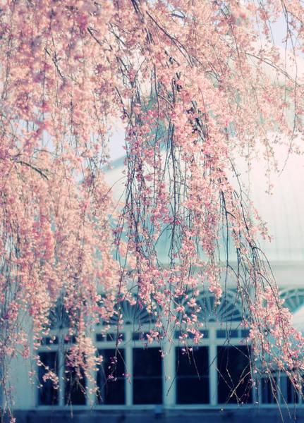Conservatory Photograph - Conservatory  In Spring by Jessica Jenney