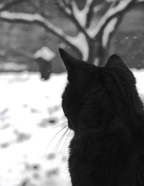 Contemplating Winter Art Print