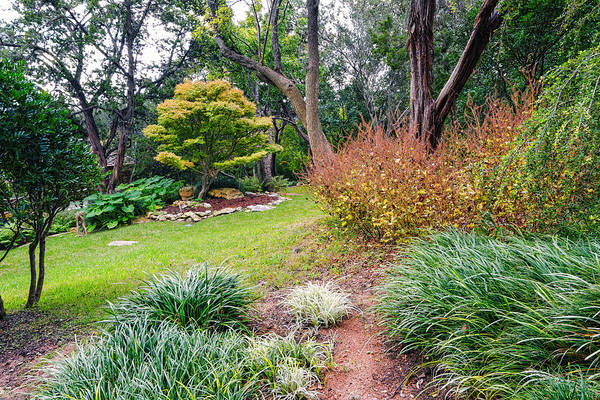 Photograph - Contemplation Zilker Botanical Gardens Austin Texas by Silvio Ligutti