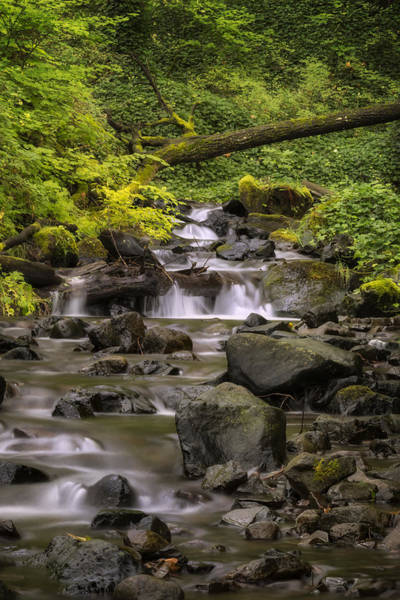 Photograph - Contemplative Creek by Jon Ares