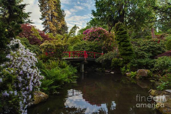 Koi Photograph - Contemplative Northwest Garden by Mike Reid