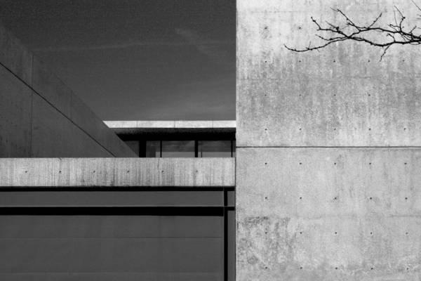 Photograph - Contemporary Concrete Block Architecture Tree by Patrick Malon