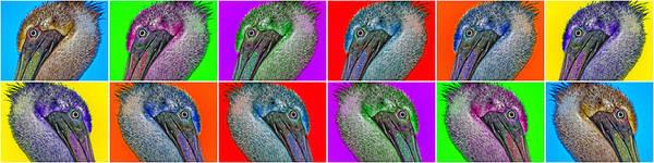 Brown Pelicans Photograph - Contemporary Pelicans by Betsy Knapp