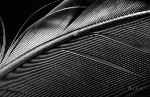 Photograph - Contour Feather by Vickie Szumigala
