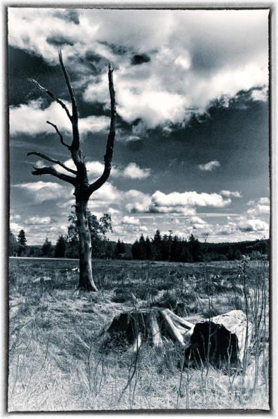 Desolation Photograph - Contrasting Feelings by Simona Ghidini