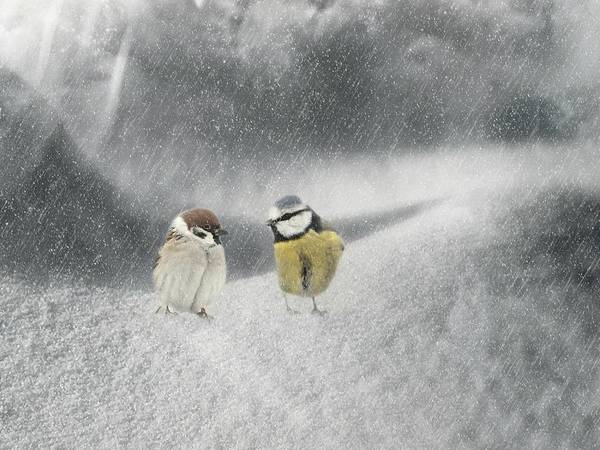 Sparrow Mixed Media - Conversation In The Snow by Heike Hultsch