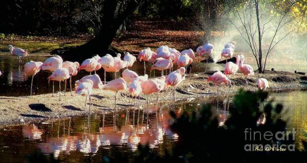 Painting - Convocation In Pink by RC DeWinter