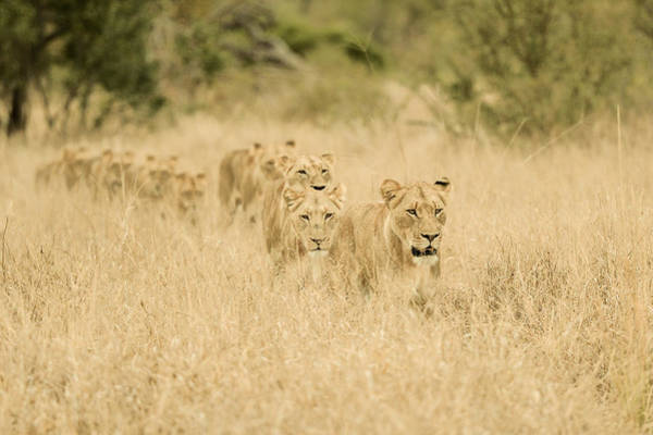 Hunt Wall Art - Photograph - Convoy by Mohammed Alnaser