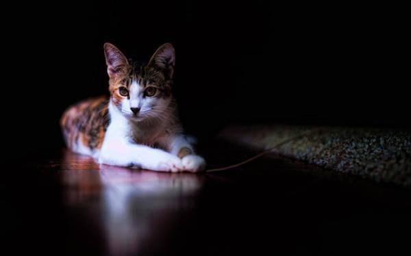Photograph - Cookie Portrait by Dan McManus