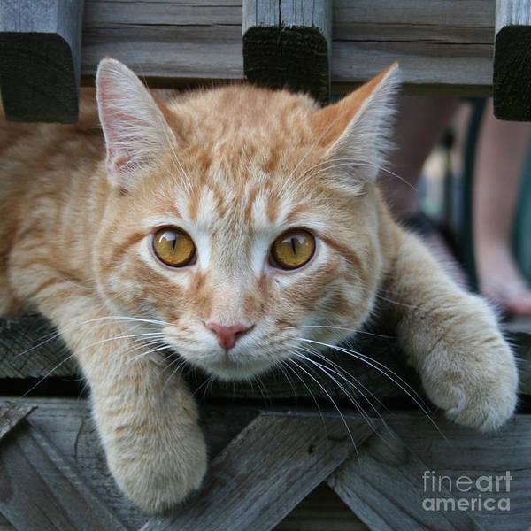 Cool Cat Named Calvin Art Print
