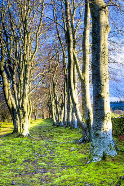 Photograph - Cool Light Of A Scottish Winter Morning by Mark Tisdale