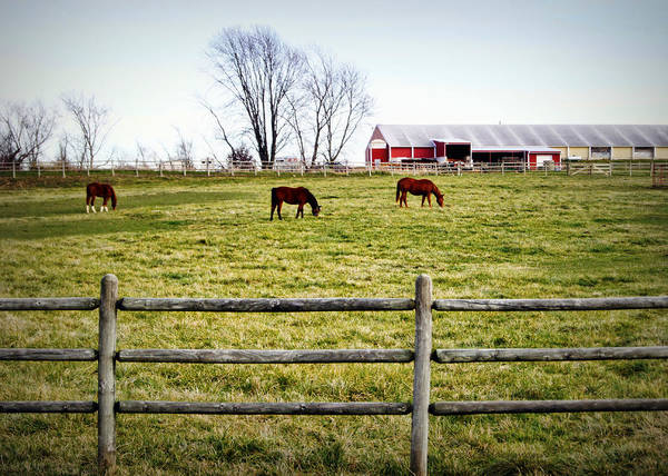 Photograph - Cool Weather Graze by Cricket Hackmann