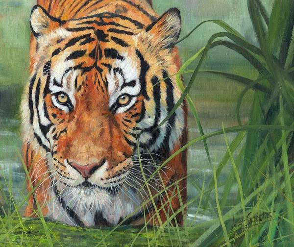 Bengal Tiger Painting - Cooling Down by David Stribbling