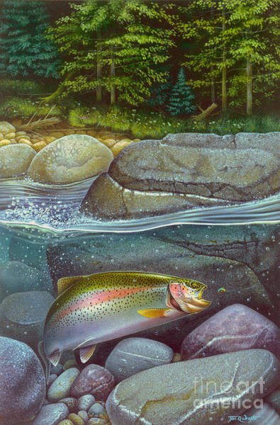 Painting - Coolwaters Rainbow Trout by JQ Licensing