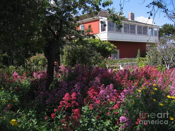 Photograph - Cooper-molera Garden by James B Toy